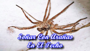 Soñar Con Arañas En El Techo