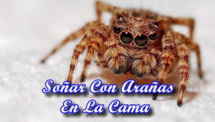 Soñar Con Arañas En La Cama