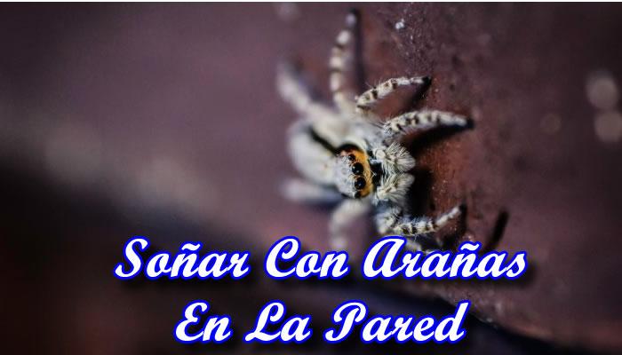 Significado de soñar con arañas en la pared