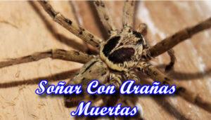 Soñar Con Arañas Muertas