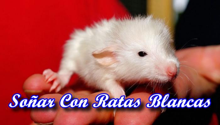 Qué Significa Soñar Con Ratas Blancas