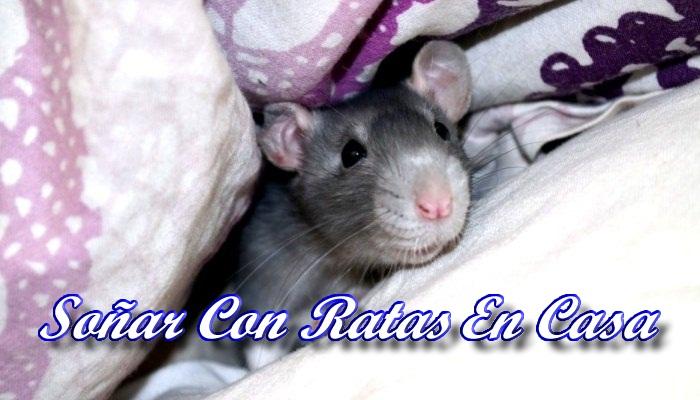 Soñar Con Ratas En La Casa