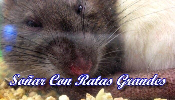 Soñar Con Ratas Grandes