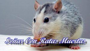 Soñar Con Ratas Muertas