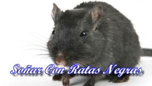Soñar Con Ratas Negras