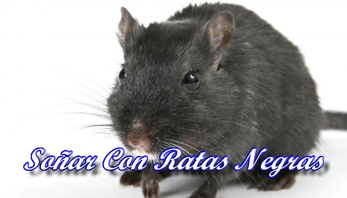 Qué significa soñar con ratas negras