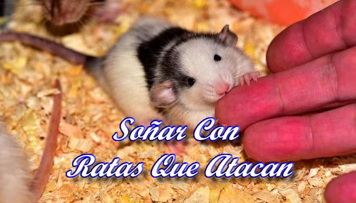 El significado de soñar con ratas que atacan
