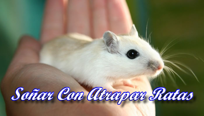 Soñar con atrapar ratas