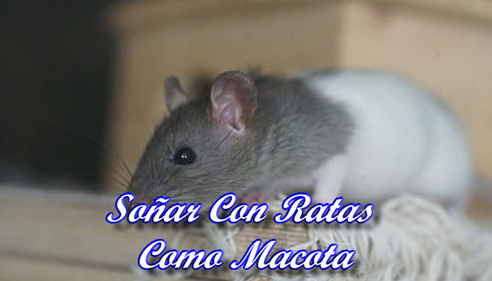 Soñar con ratas mascotas