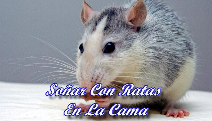 Soñar Con Ratas En La Cama
