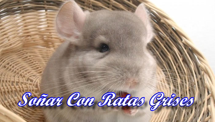 Soñar con ratas grises en la cama