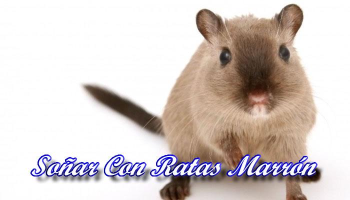 Soñar con ratas marrones