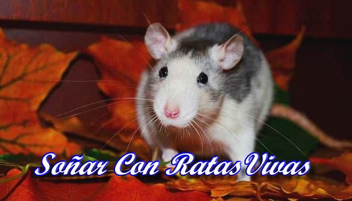 Soñar con ratas vivas