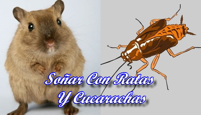 Soñar Con Ratas Y Cucarachas