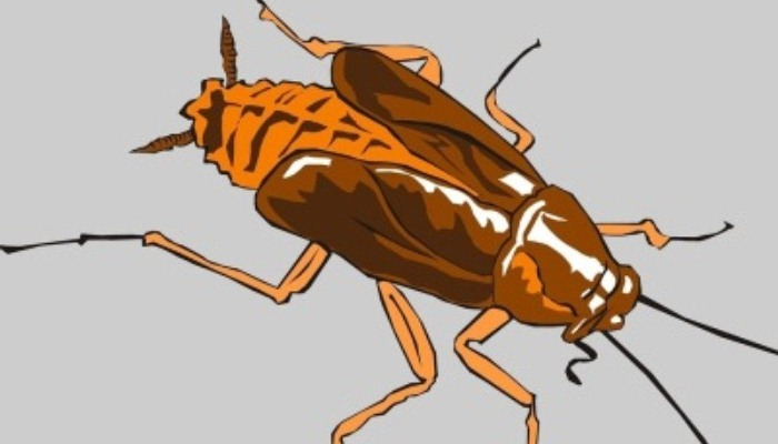 Soñar Con Cucarachas Y Ratas