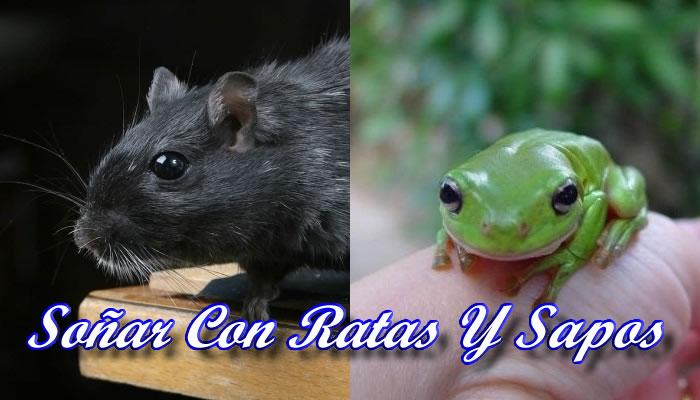 Soñar con ratas y sapos