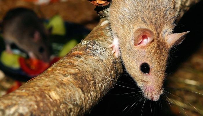 Soñar con ratones y sapos