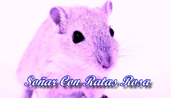Soñar Con Ratas Rosas